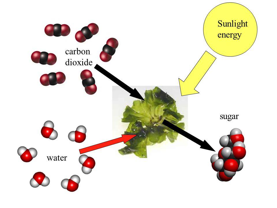 Sunlight energy carbon dioxide sugar water