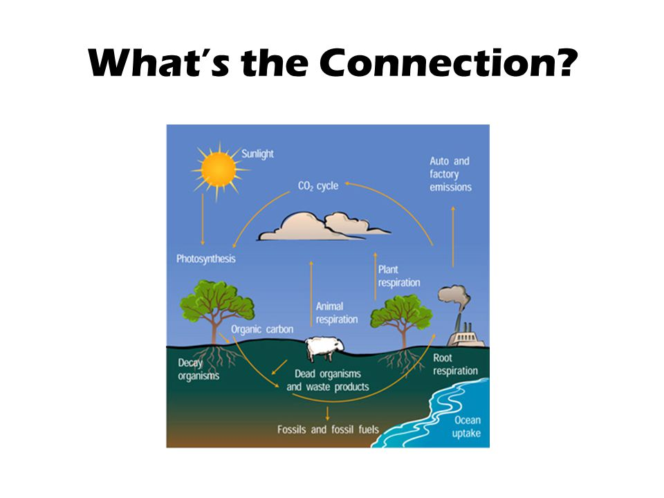 What's the Connection