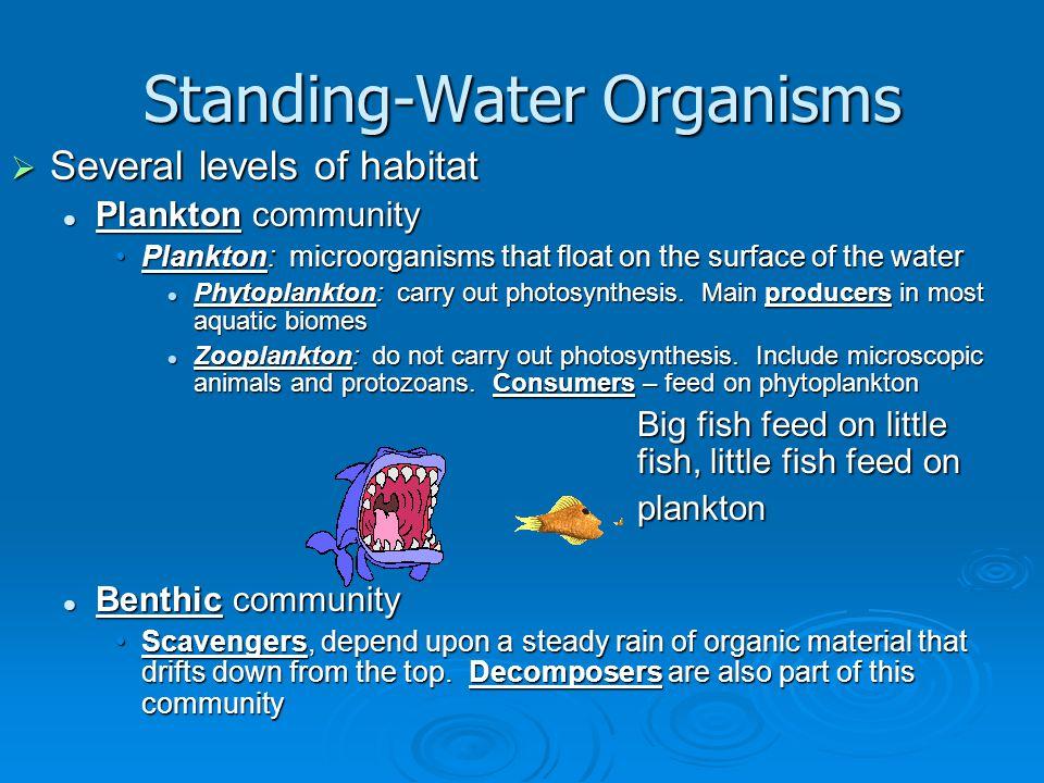 Standing-Water Organisms