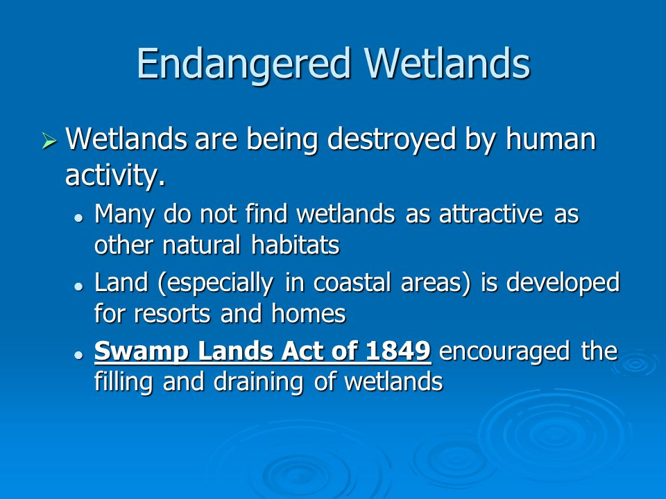 Endangered Wetlands Wetlands are being destroyed by human activity.