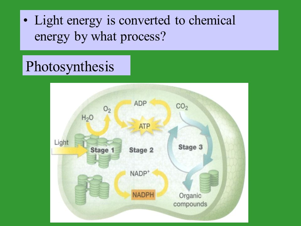 Light energy is converted to chemical energy by what process