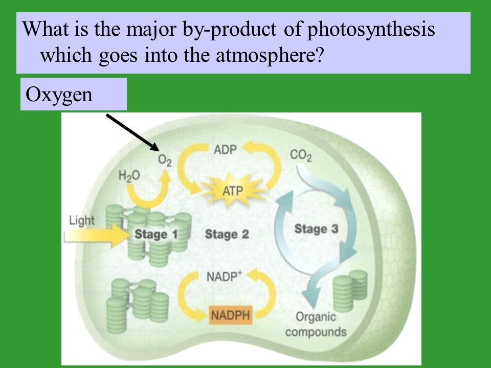 What is the major by-product of photosynthesis which goes into the atmosphere