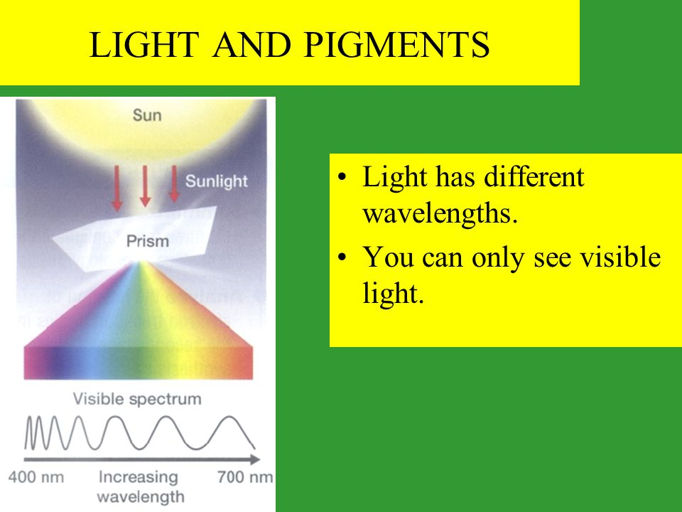 LIGHT AND PIGMENTS Light has different wavelengths.