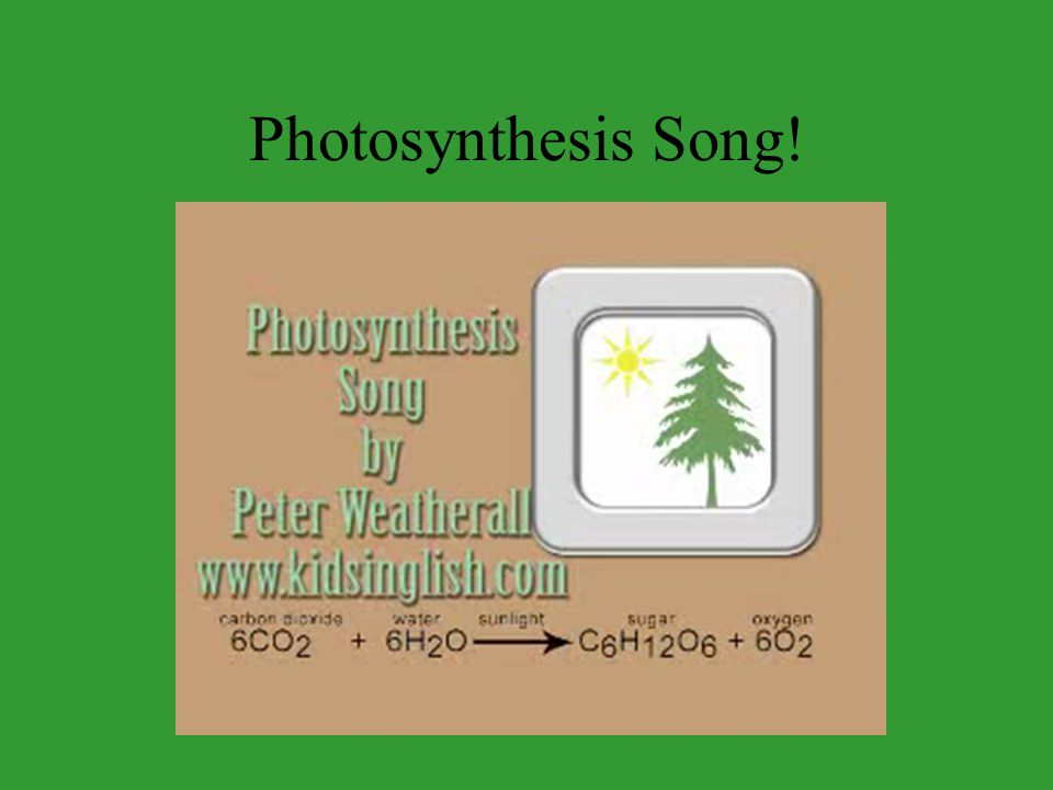 Photosynthesis Song!