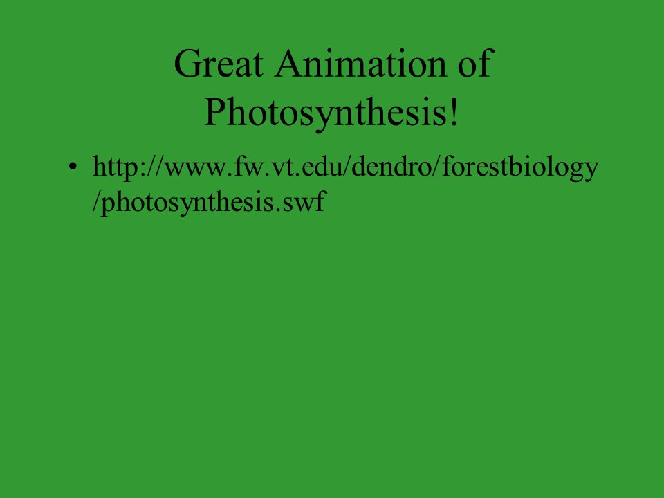 Great Animation of Photosynthesis!