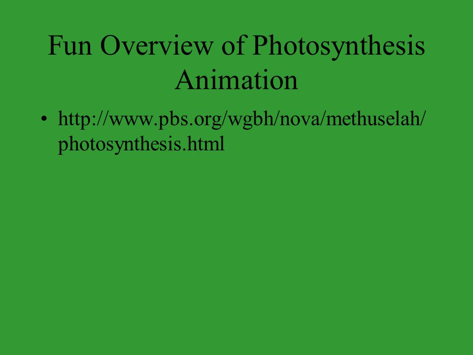Fun Overview of Photosynthesis Animation
