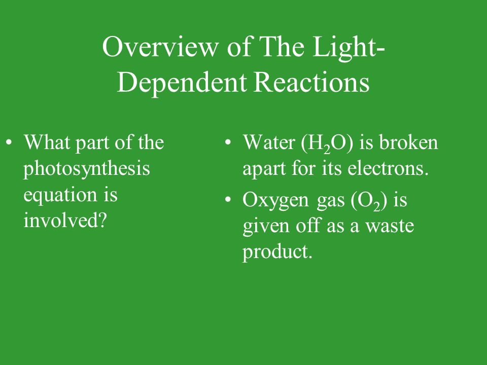 Overview of The Light-Dependent Reactions