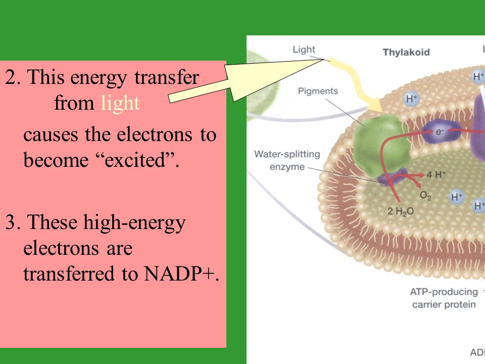 2. This energy transfer from light