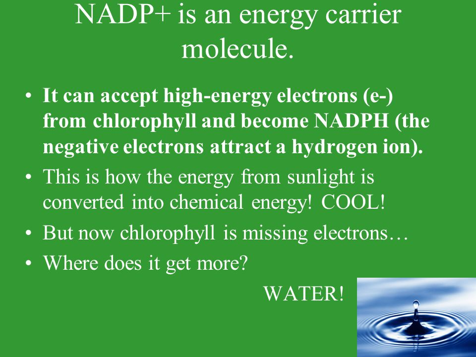 NADP+ is an energy carrier molecule.