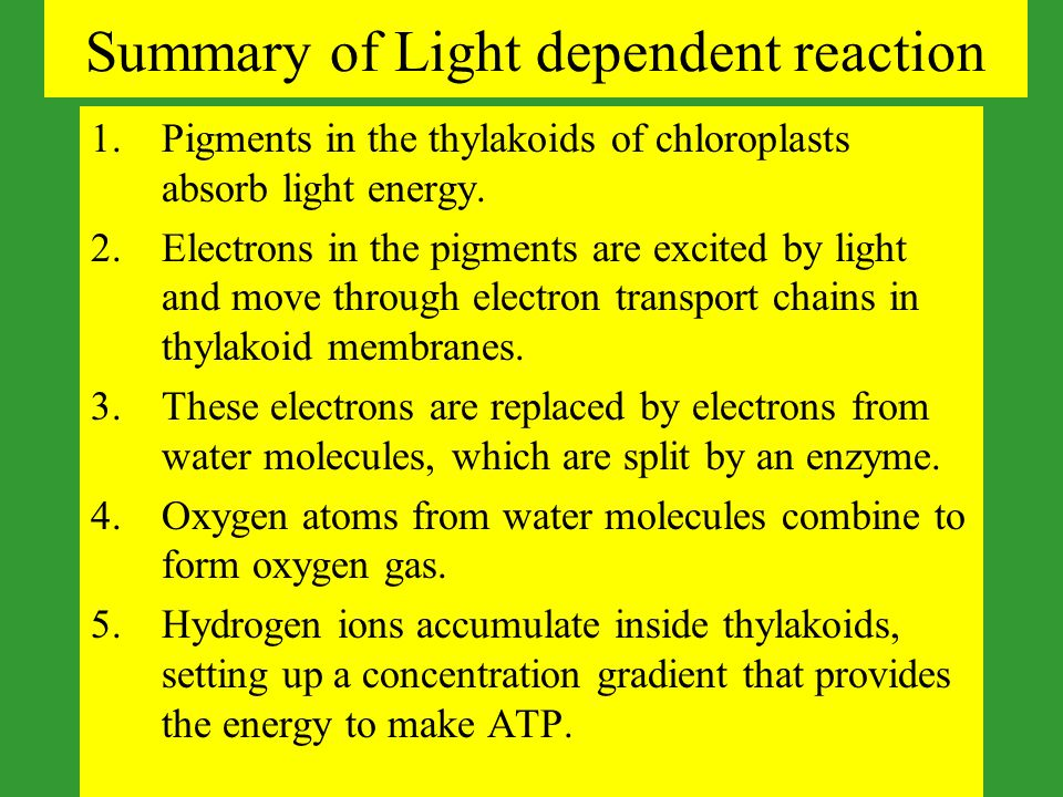 Summary of Light dependent reaction