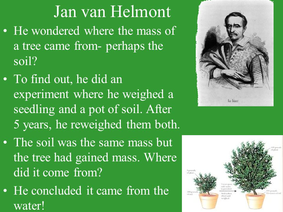 Jan van Helmont He wondered where the mass of a tree came from- perhaps the soil