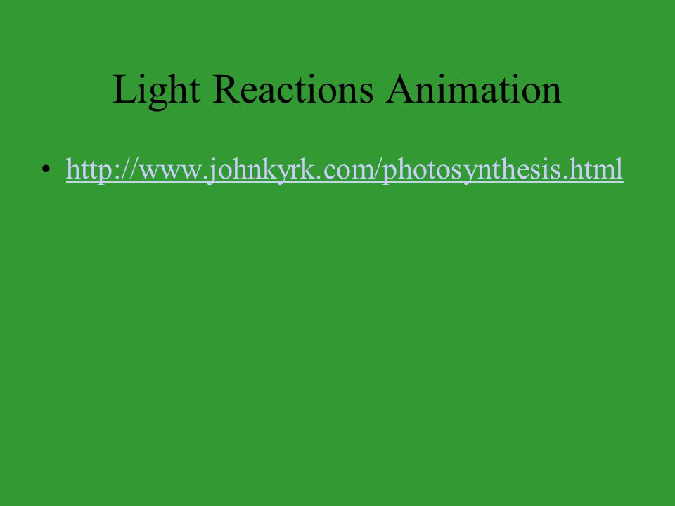 Light Reactions Animation