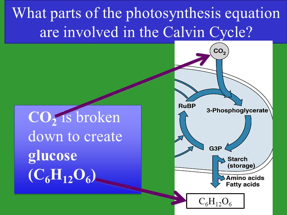 What parts of the photosynthesis equation are involved in the Calvin Cycle