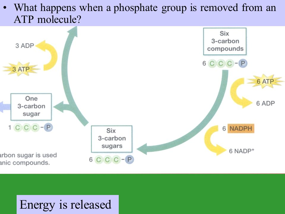 What happens when a phosphate group is removed from an ATP molecule