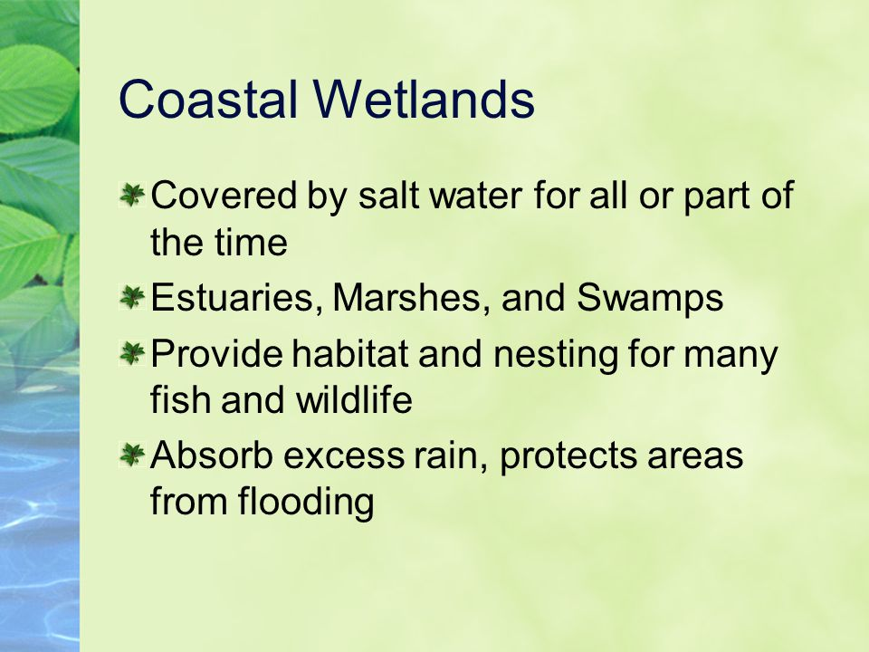 Coastal Wetlands Covered by salt water for all or part of the time