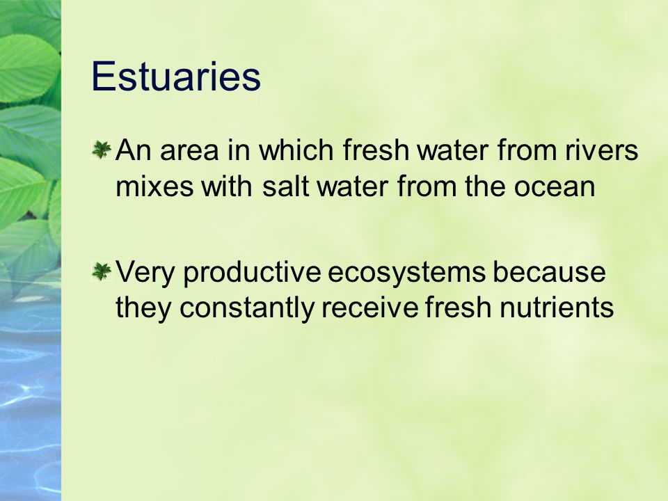 Estuaries An area in which fresh water from rivers mixes with salt water from the ocean.