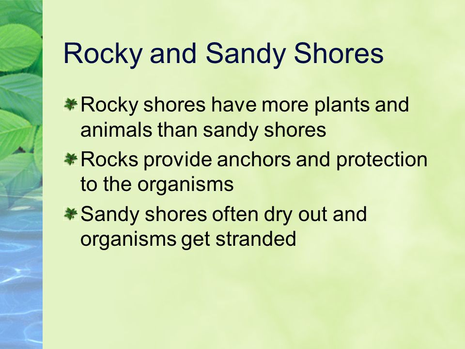 Rocky and Sandy Shores Rocky shores have more plants and animals than sandy shores. Rocks provide anchors and protection to the organisms.