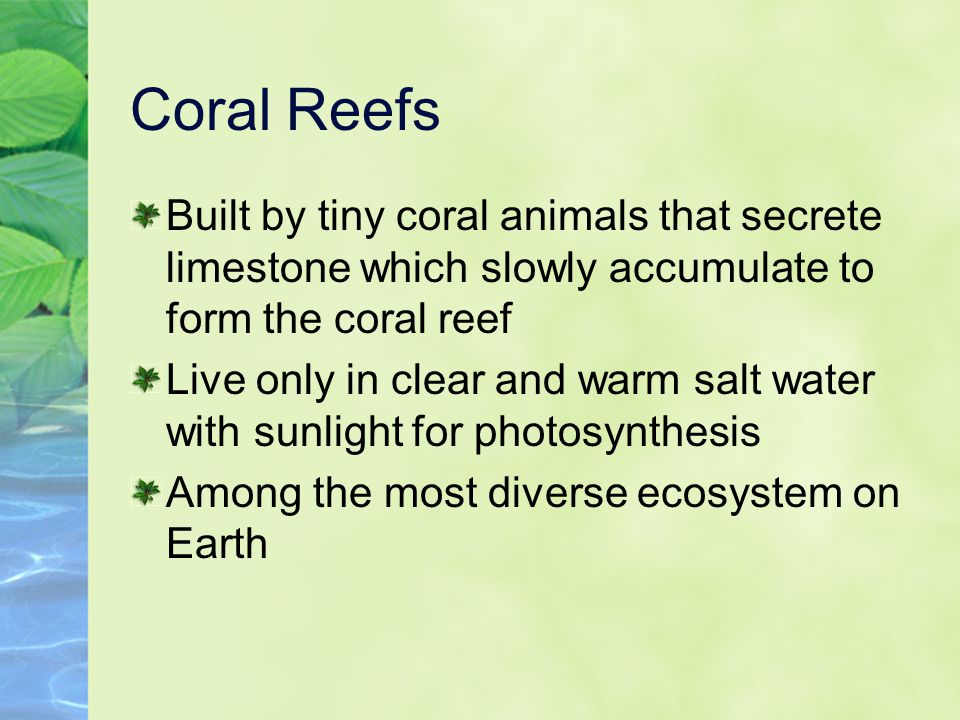 Coral Reefs Built by tiny coral animals that secrete limestone which slowly accumulate to form the coral reef.