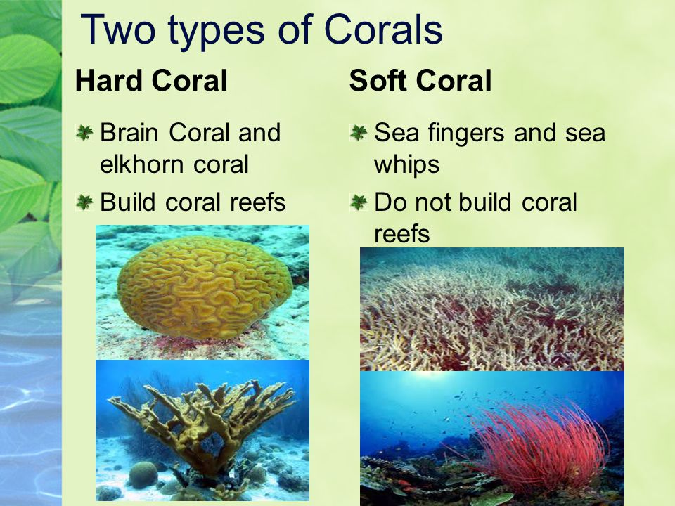 Two types of Corals Hard Coral Soft Coral