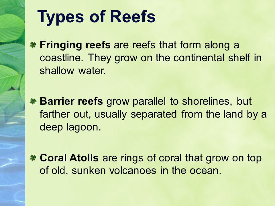Types of Reefs Fringing reefs are reefs that form along a coastline. They grow on the continental shelf in shallow water.