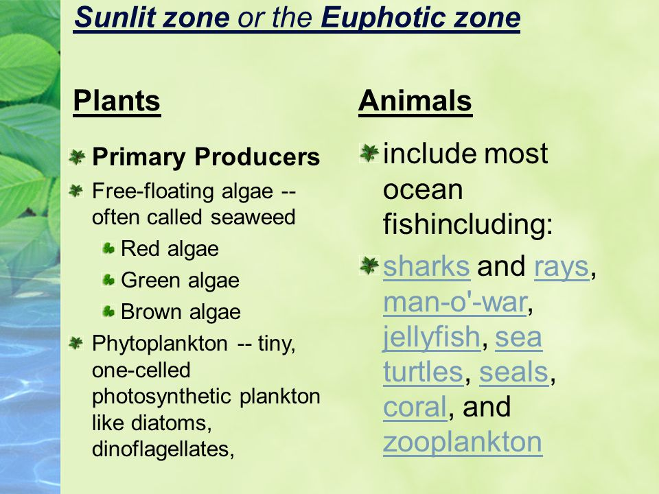 Sunlit zone or the Euphotic zone
