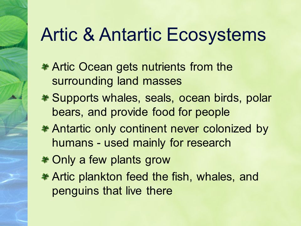 Artic & Antartic Ecosystems