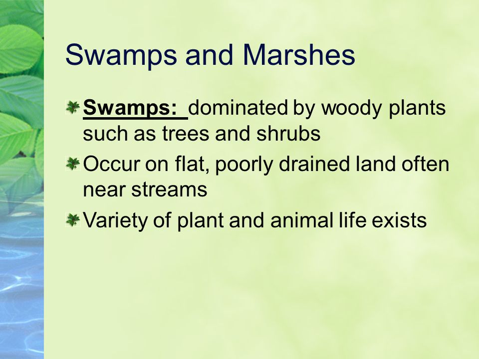 Swamps and Marshes Swamps: dominated by woody plants such as trees and shrubs. Occur on flat, poorly drained land often near streams.