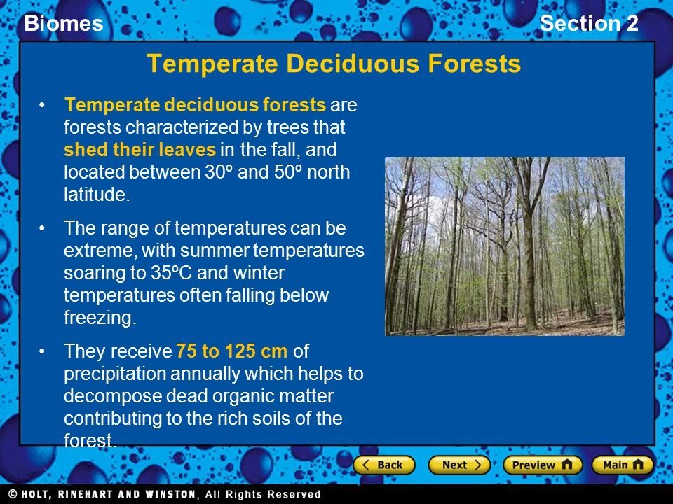Temperate Deciduous Forests
