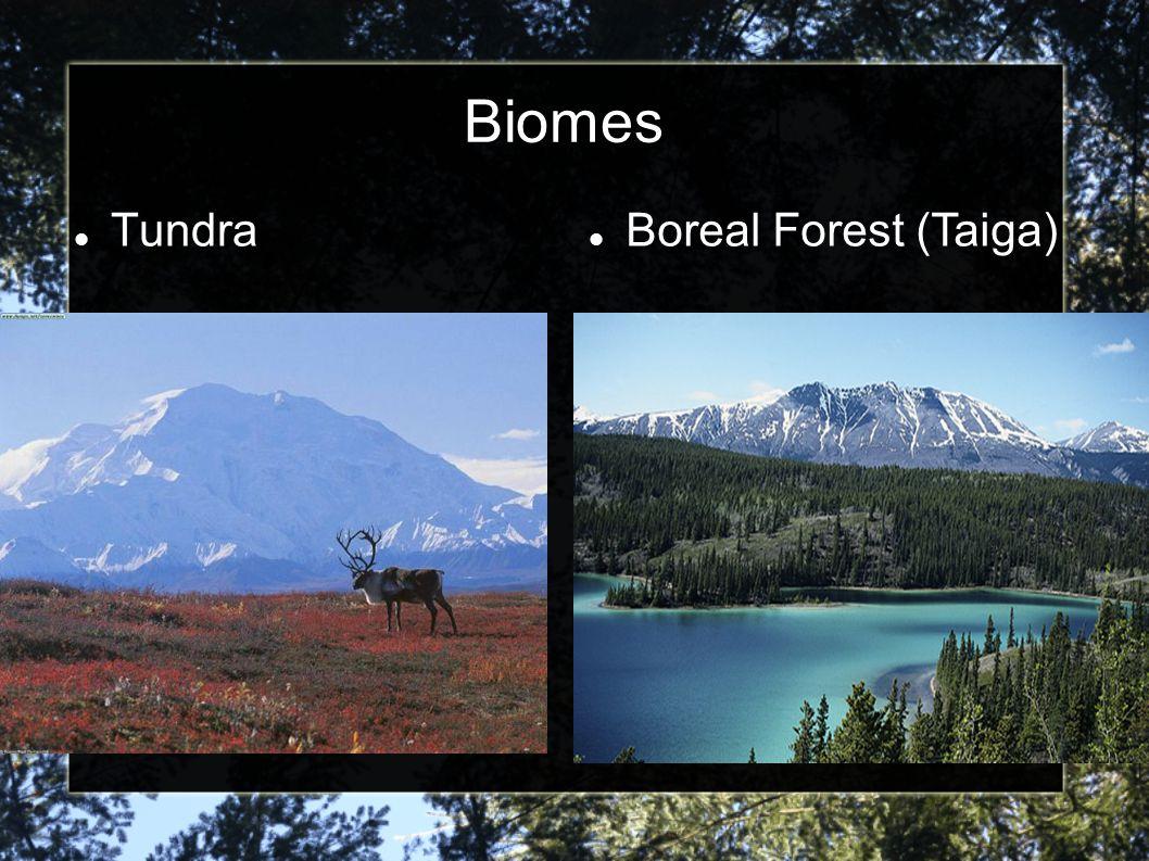 Biomes Tundra Boreal Forest (Taiga)