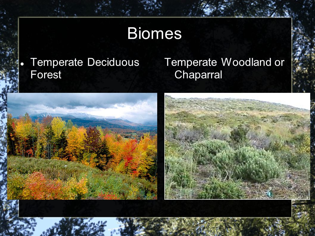 Biomes Temperate Deciduous Forest Temperate Woodland or Chaparral