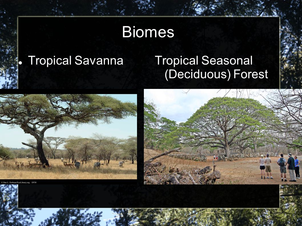 Biomes Tropical Savanna Tropical Seasonal (Deciduous) Forest