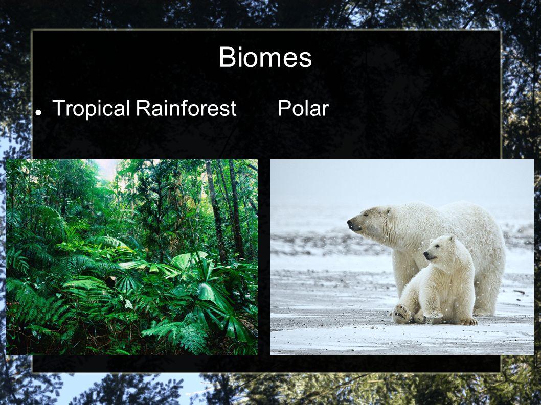 Biomes Tropical Rainforest Polar