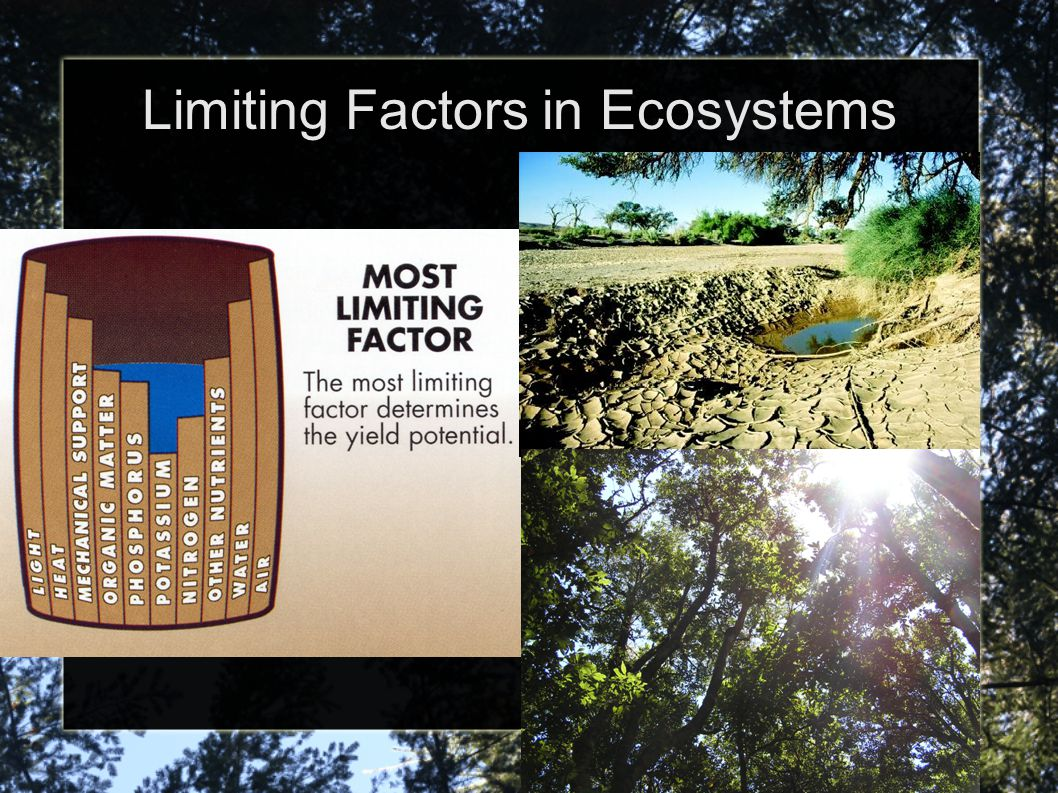 Limiting Factors in Ecosystems