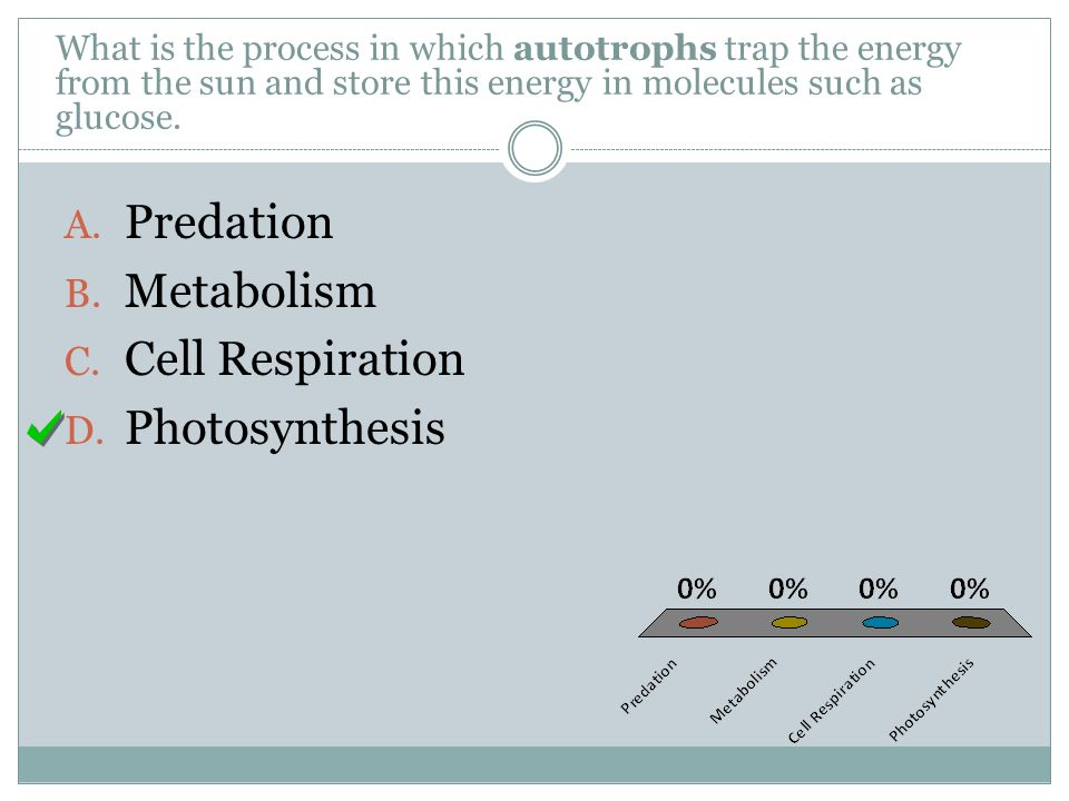 Predation Metabolism Cell Respiration Photosynthesis
