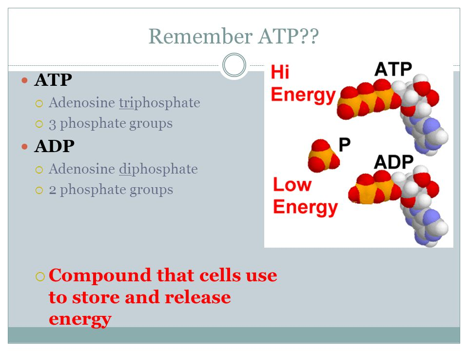 Remember ATP Compound that cells use to store and release energy ATP
