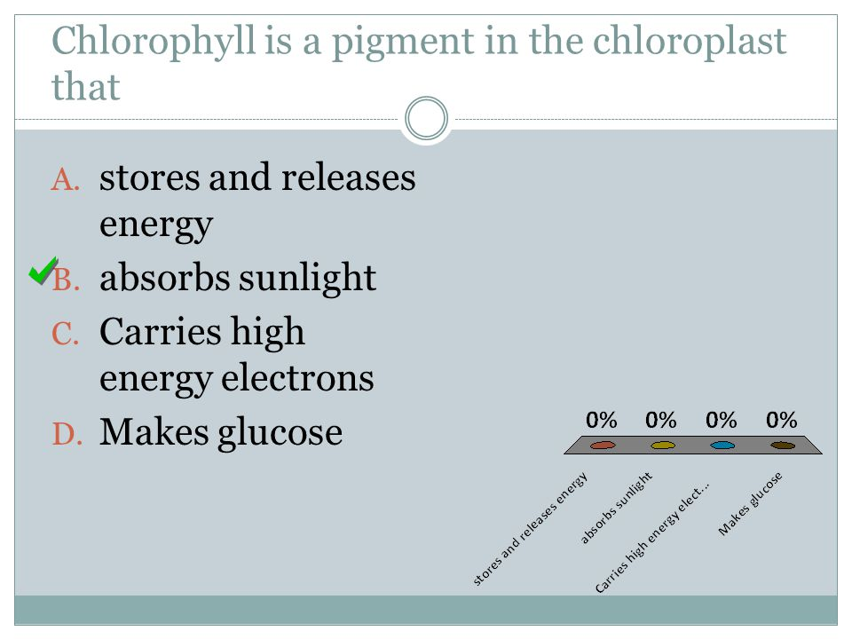 Chlorophyll is a pigment in the chloroplast that