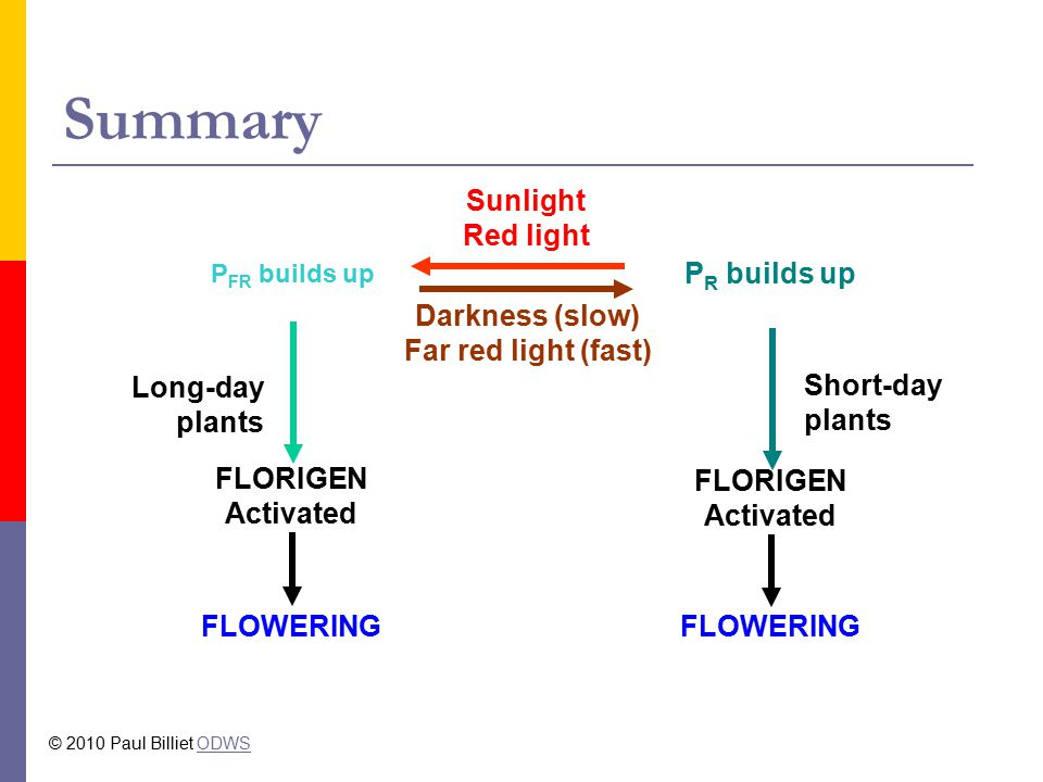 Summary Sunlight Red light PR builds up Darkness (slow)
