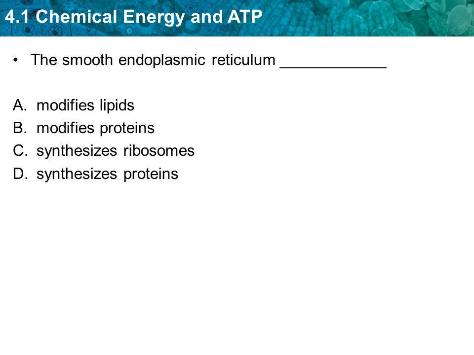 The smooth endoplasmic reticulum ____________