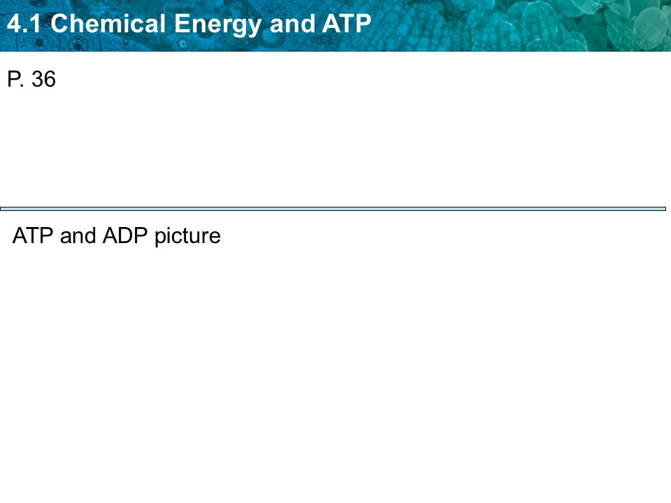 P. 36 ATP and ADP picture