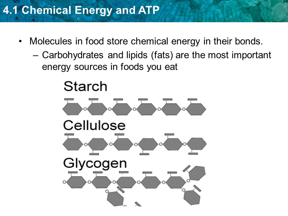 Molecules in food store chemical energy in their bonds.