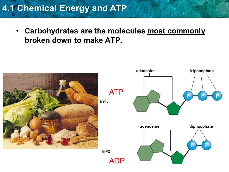 Carbohydrates are the molecules most commonly broken down to make ATP.