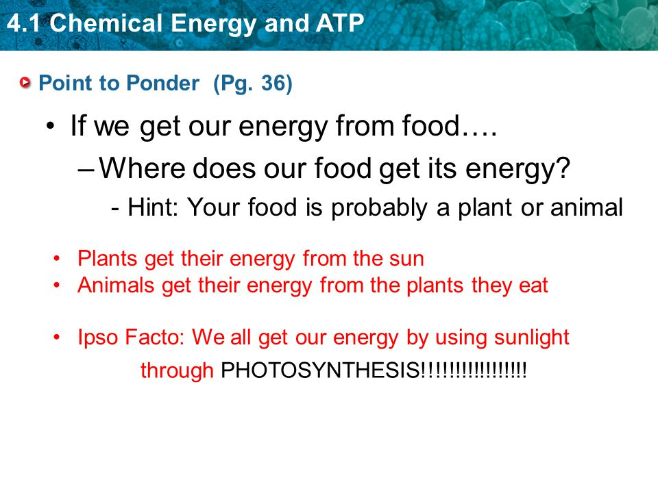 If we get our energy from food…. Where does our food get its energy