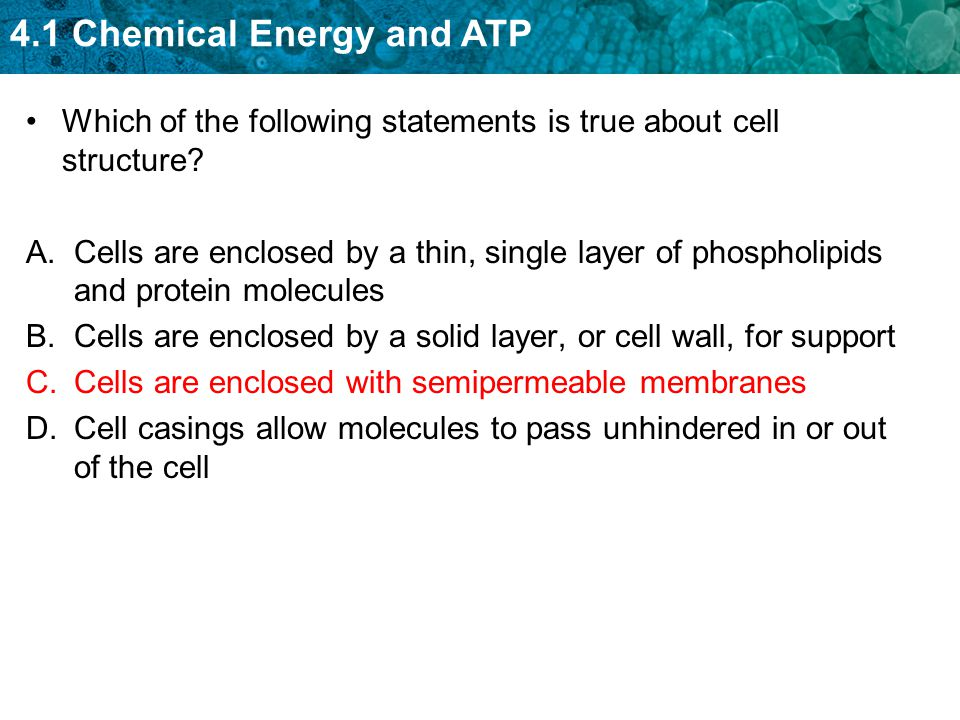 Which of the following statements is true about cell structure