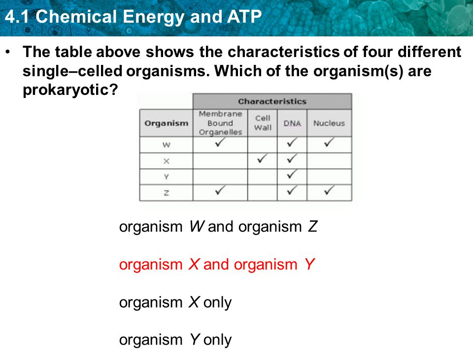 The table above shows the characteristics of four different single–celled organisms. Which of the organism(s) are prokaryotic