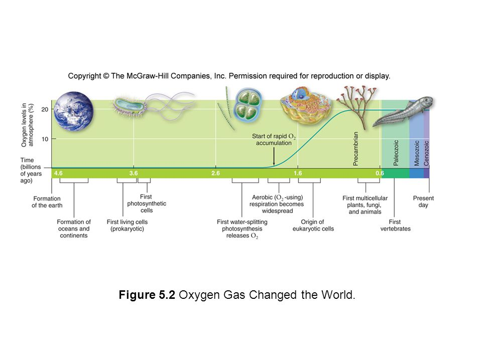 Figure 5.2 Oxygen Gas Changed the World.
