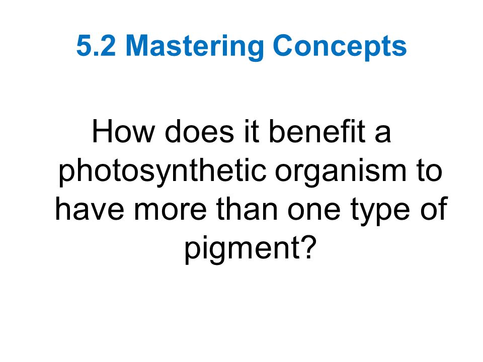 5.2 Mastering Concepts How does it benefit a photosynthetic organism to have more than one type of pigment