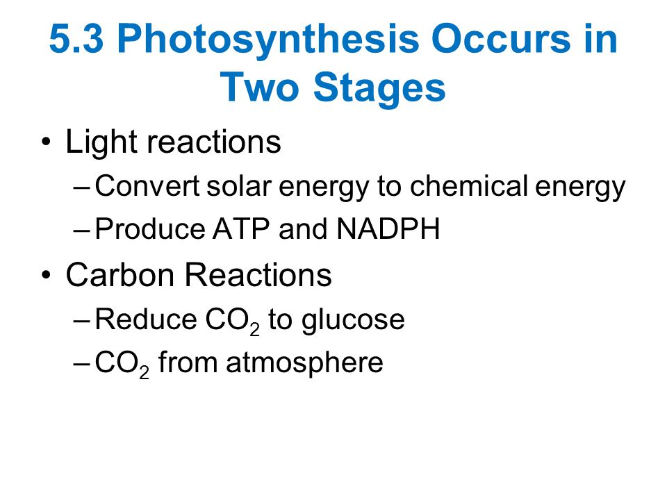 5.3 Photosynthesis Occurs in Two Stages