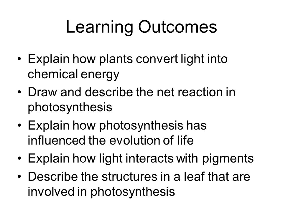 Learning Outcomes Explain how plants convert light into chemical energy. Draw and describe the net reaction in photosynthesis.