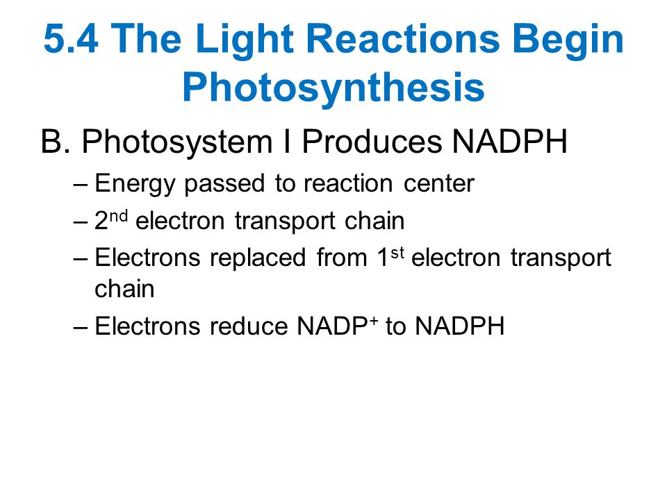 5.4 The Light Reactions Begin Photosynthesis