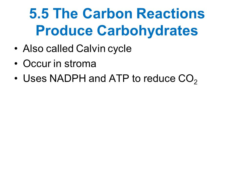 5.5 The Carbon Reactions Produce Carbohydrates